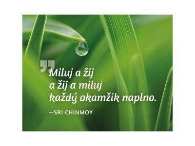 Miluj a žij a žij a miluj každý okamžik naplno - Sri Chinmoy