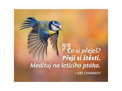 Co si přeješ? Přeji si štěstí. Medituj na letícího ptáka - Sri Chinmoy