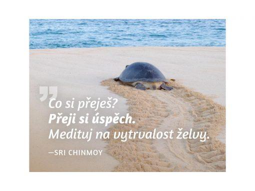 Co si přeješ? Přeji si úspěch. Medituj na vytrvalost želvy - Sri Chinmoy