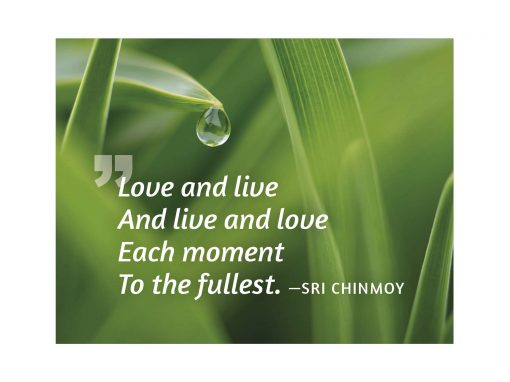 Love and live and live and love each moment to the fullest - Sri Chinmoy